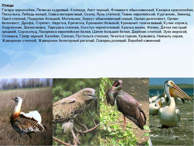 Птицы Гагара чернозобая, Пеликан кудрявый, Колпица, Аист черный, Фламинго обы...