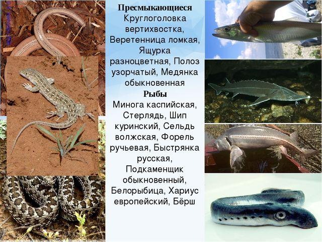 Пресмыкающиеся Круглоголовка вертихвостка, Веретенница ломкая, Ящурка разноцв...