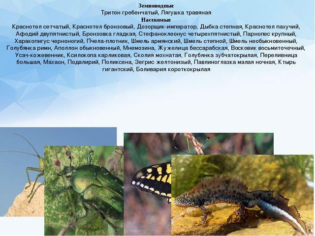 Земноводные Тритон гребенчатый, Лягушка травяная Насекомые Краснотел сетчатый...