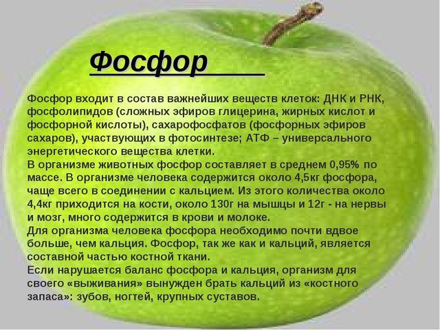 Фосфор Фосфор входит в состав важнейших веществ клеток: ДНК и РНК, фосфолипид...
