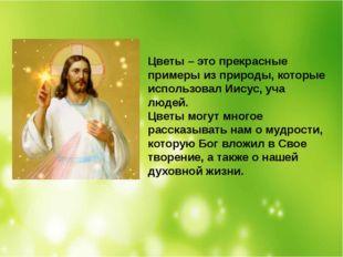 Цветы – это прекрасные примеры из природы, которые использовал Иисус, уча люд