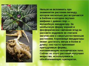 Нельзя не вспомнить про знаменитое растение-легенду, которое несколько раз вс
