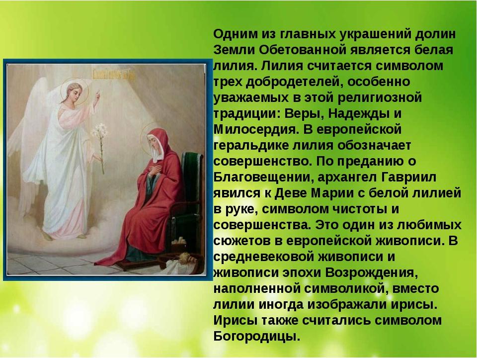 Одним из главных украшений долин Земли Обетованной является белая лилия. Лили...