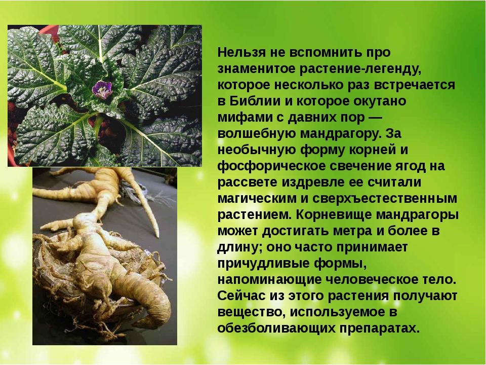 Нельзя не вспомнить про знаменитое растение-легенду, которое несколько раз вс...
