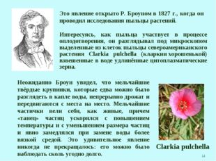* Это явление открытоР. Броуномв 1827 г., когда он проводил исследования пы