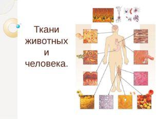 Ткани животных и человека.