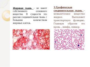 3.Трофическая соединительная ткань – межклеточное вещество жидкое. Выполняет