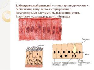 4. Мерцательный эпителий – клетки цилиндрические с ресничками, чаще всего асс
