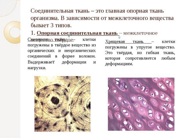 Соединительная ткань – это главная опорная ткань организма. В зависимости от...
