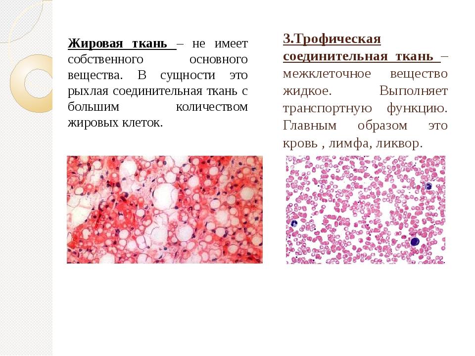 3.Трофическая соединительная ткань – межклеточное вещество жидкое. Выполняет...