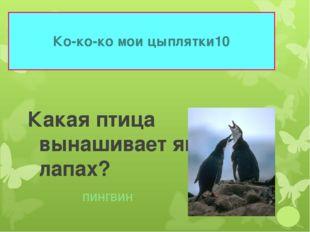 Ко-ко-ко мои цыплятки 10 Какая птица вынашивает яйца на лапах? пингвин