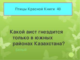 Птицы Красной Книги 40 Какой аист гнездится только в южных районах Казахстана