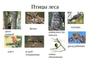 Птицы леса дятел зелёный филин длиннохвостая неясыть кукушка клёст ястреб- те