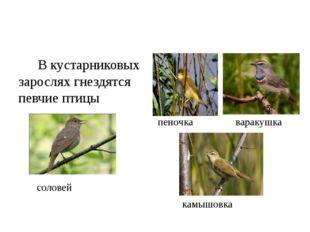 В кустарниковых зарослях гнездятся певчие птицы соловей пеночка варакушка ка