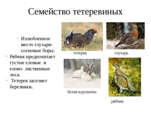Семейство тетеревиных тетерев глухарь белая куропатка рябчик Излюбленное мест