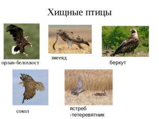 Хищные птицы орлан-белохвост змееяд беркут сокол ястреб -тетеревятник