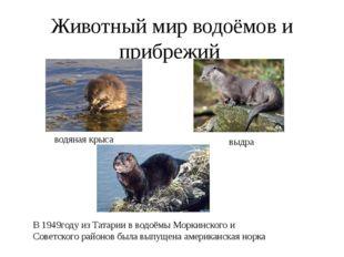 Животный мир водоёмов и прибрежий водяная крыса выдра В 1949году из Татарии в