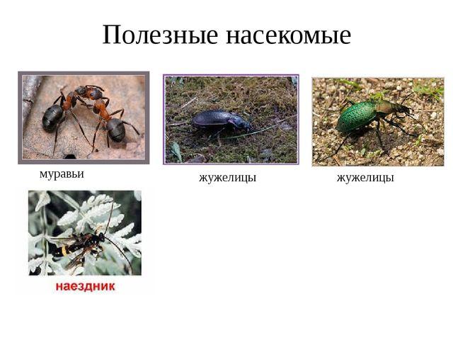 Полезные насекомые муравьи жужелицы жужелицы