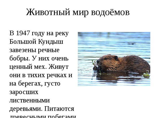 Животный мир водоёмов В 1947 году на реку Большой Кундыш завезены речные бобр...