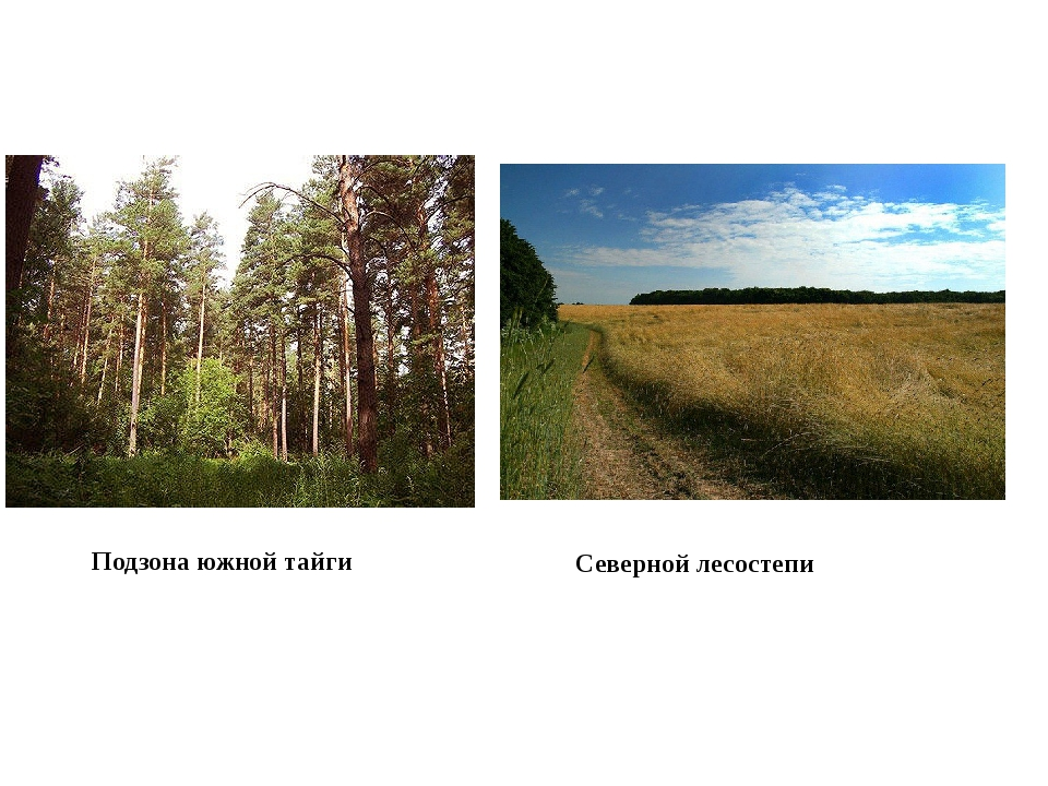 Подзона южной тайги Северной лесостепи