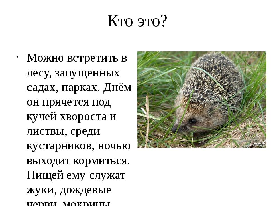 Кто это? Можно встретить в лесу, запущенных садах, парках. Днём он прячется п...
