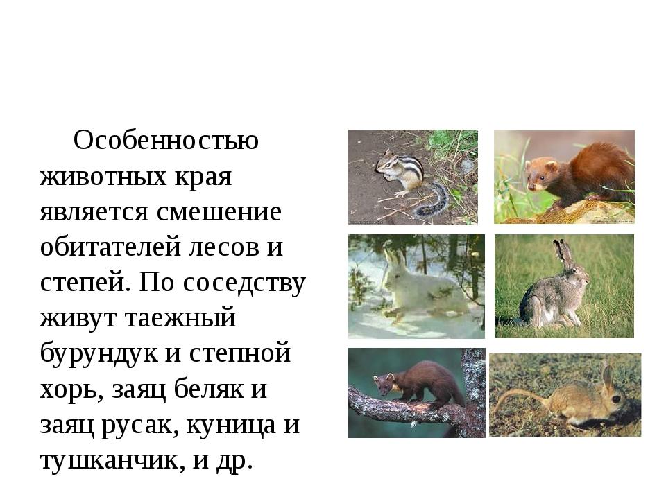 Особенностью животных края является смешение обитателей лесов и степей. По с...