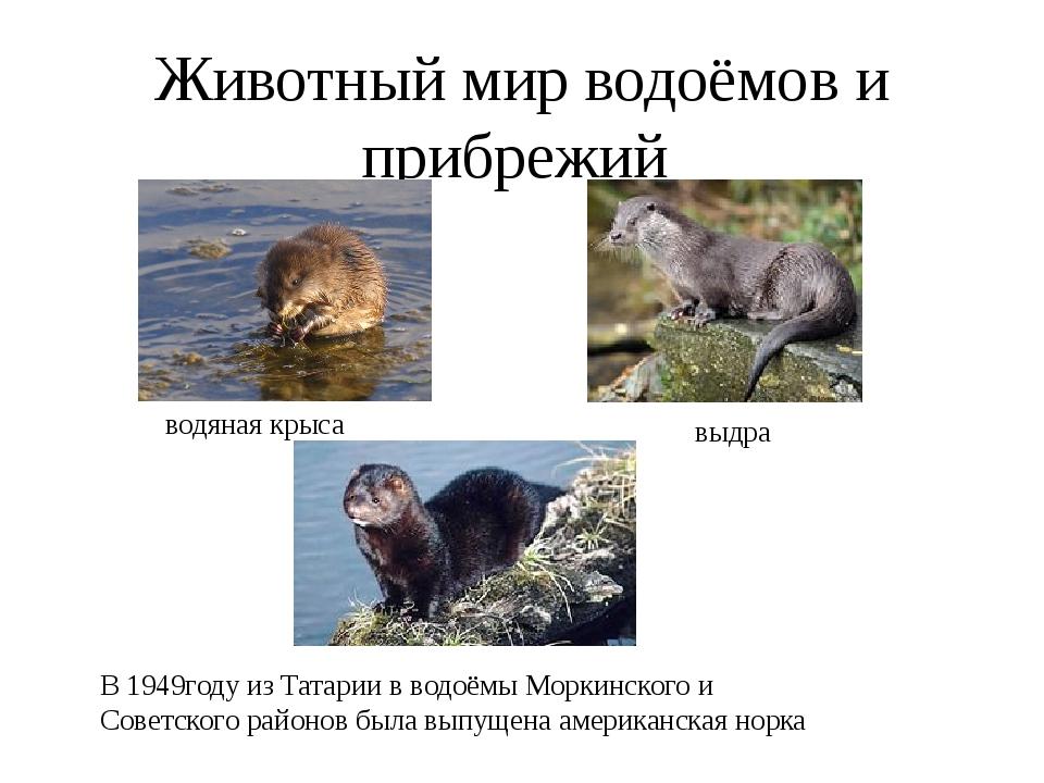 Животный мир водоёмов и прибрежий водяная крыса выдра В 1949году из Татарии в...