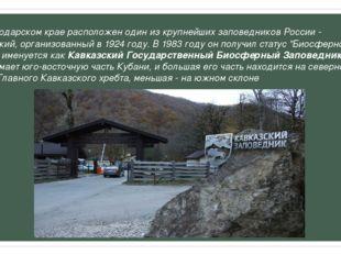 ВКраснодарском краерасположен один из крупнейших заповедников России - Кавк