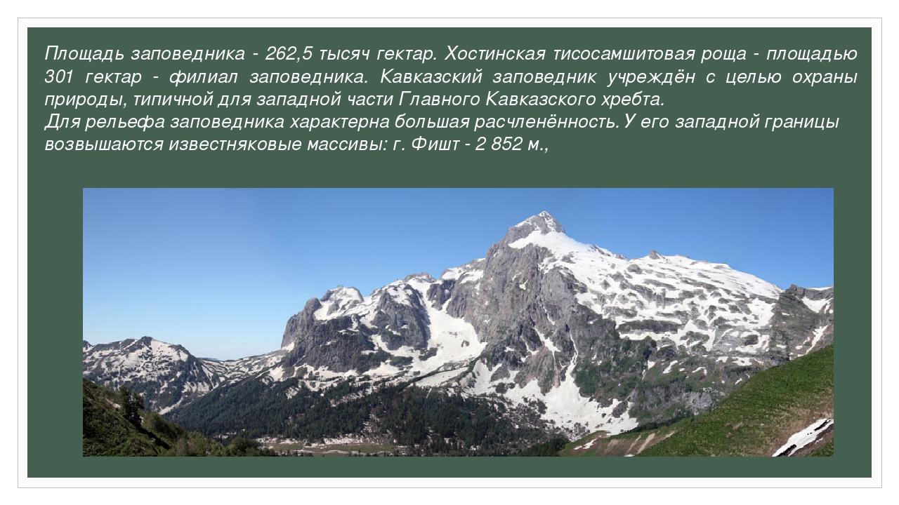 Площадь заповедника - 262,5 тысяч гектар. Хостинская тисосамшитовая роща - пл...