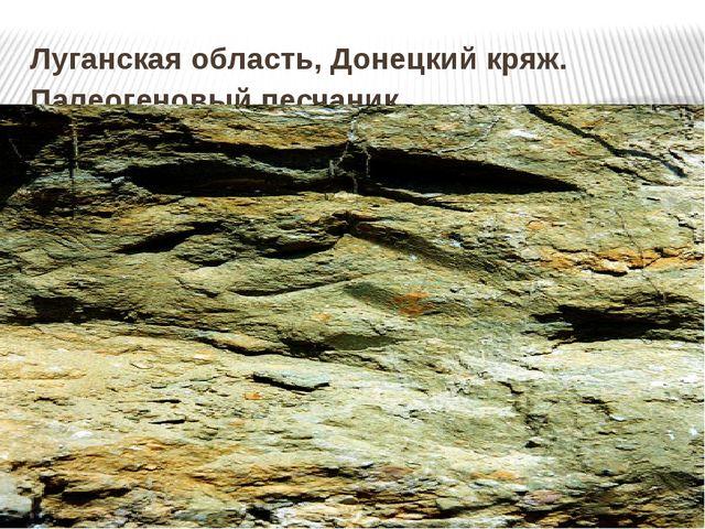 Луганская область, Донецкий кряж. Палеогеновый песчаник