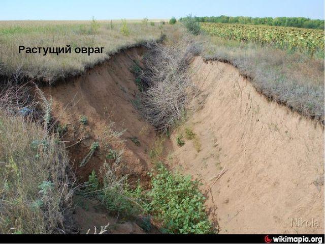 Терриконы и овраги повлияли на рельеф Луганской области Растущий овраг
