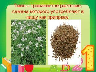 Тмин – травянистое растение, семена которого употребляют в пищу как приправу.