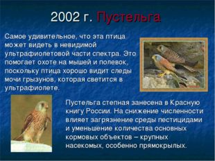 2002 г. Пустельга Самое удивительное, что эта птица может видеть в невидимой