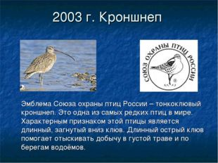 2003 г. Кроншнеп Эмблема Союза охраны птиц России – тонкоклювый кроншнеп. Это