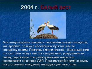 2004 г. Белый аист Эта птица издавна связана с человеком и ныне гнездится, ка