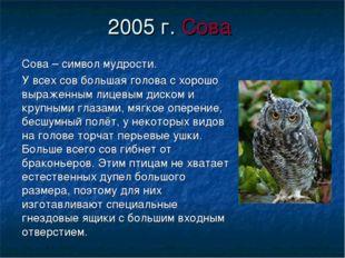 2005 г. Сова Сова – символ мудрости. У всех сов большая голова с хорошо выраж