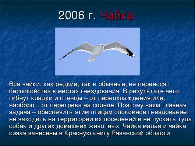 2006 г. Чайка Все чайки, как редкие, так и обычные, не переносят беспокойства...