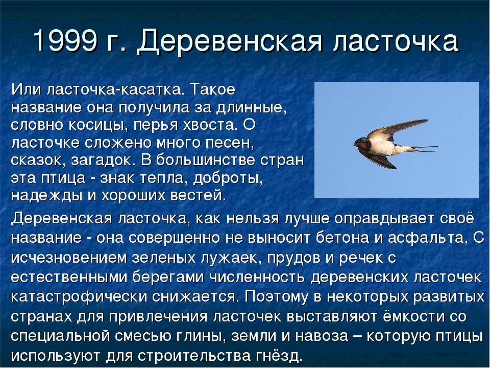1999 г. Деревенская ласточка Или ласточка-касатка. Такое название она получил...
