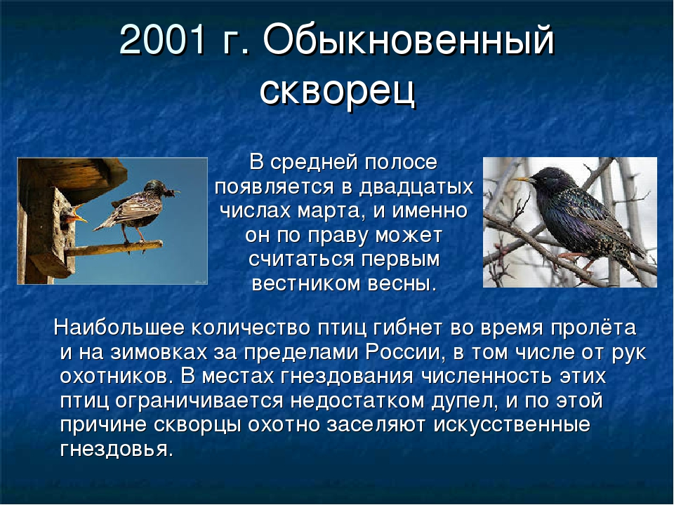 2001 г. Обыкновенный скворец В средней полосе появляется в двадцатых числах м...