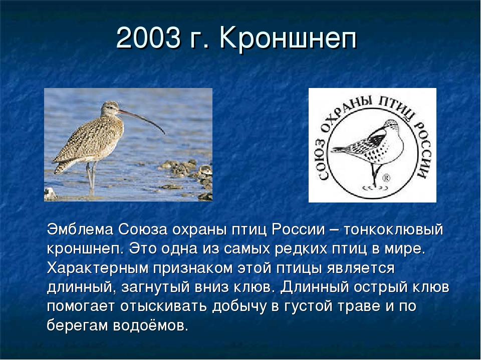 2003 г. Кроншнеп Эмблема Союза охраны птиц России – тонкоклювый кроншнеп. Это...
