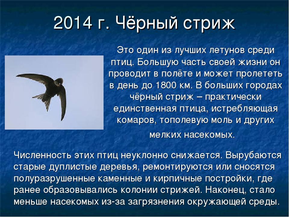 2014 г. Чёрный стриж Это один из лучших летунов среди птиц. Большую часть сво...
