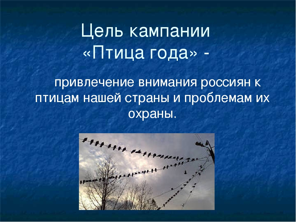Цель кампании «Птица года» - привлечение внимания россиян к птицам нашей стра...