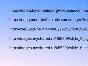 https://upload.wikimedia.org/wikipedia/commons/thumb/9/9a/Acropora.JPG/1024p