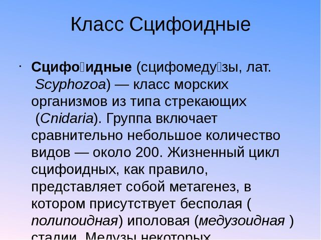 Класс Сцифоидные Сцифо́идные(сцифомеду́зы,лат.Scyphozoa)— класс морских о...