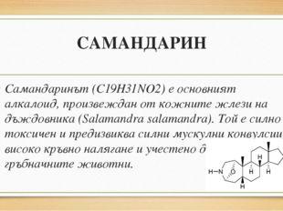 САМАНДАРИН Самандаринът (C19H31NO2) е основният алкалоид, произвеждан от кожн