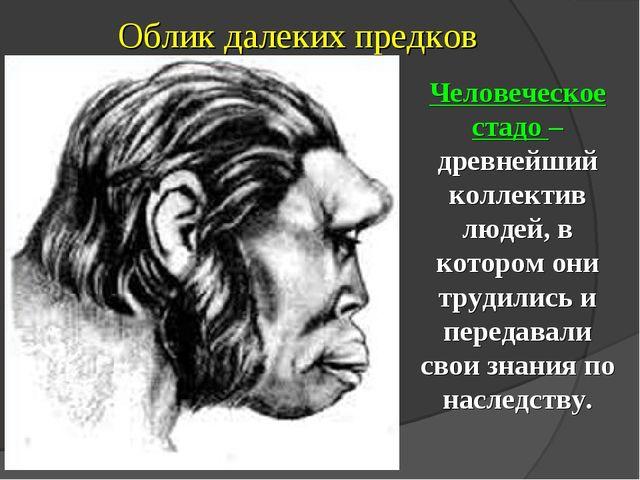 Облик далеких предков Человеческое стадо – древнейший коллектив людей, в кото...