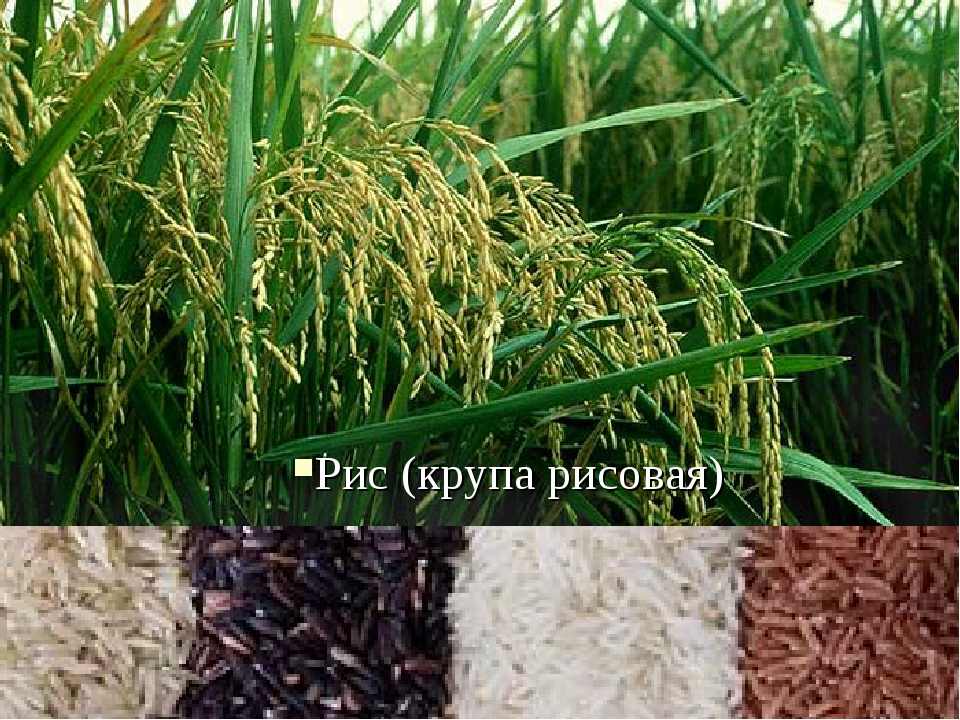 Рис (крупа рисовая)