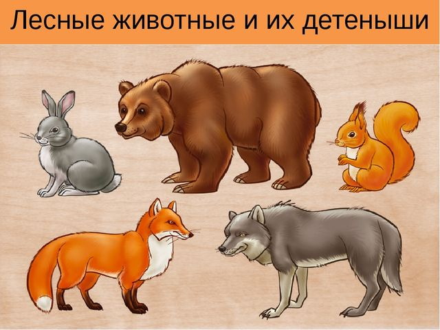 Лесные животные и их детеныши