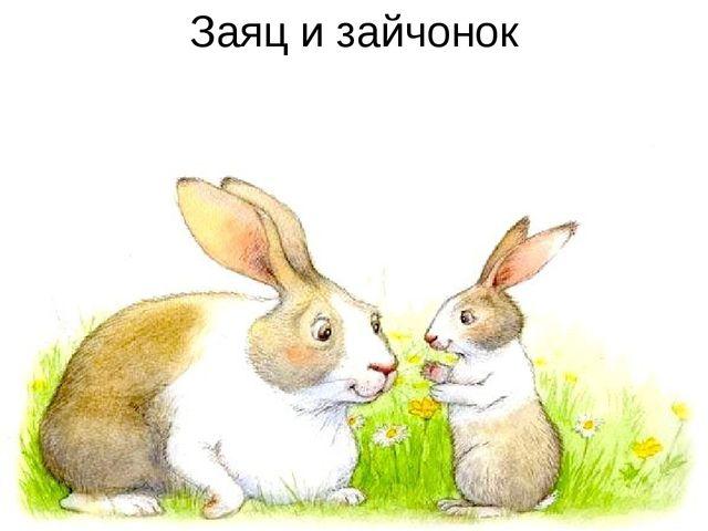 Заяц и зайчонок