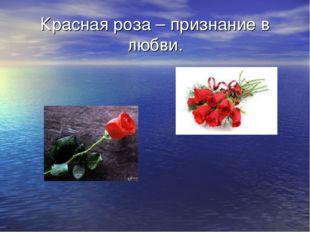 Красная роза – признание в любви.